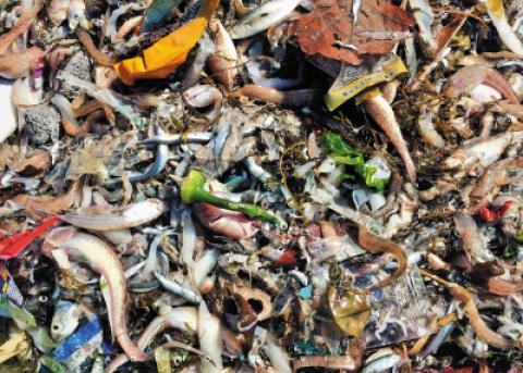 海洋垃圾触目惊心:来看看在旅顺这一网打上来的海货