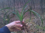 徐州人注意!一农民顺手采了3棵草,竟然被判了三年!路边的野花不要采!