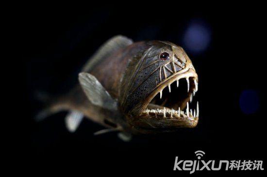 资料图 深海怪物丑鱼被指营养高 网友:又要灭绝了 大自然无奇不有,生物的长相已经超乎了我们的想象,各种奇奇怪怪,或是惊人吓人或是可爱萌萌哒。最近,澳大利亚发现了奇怪深海生物。 据外媒报道,继上周一条头似海豚身似鳄鱼的奇怪深海生物于新南韦尔斯省搁浅,澳大利亚再有渔民发现奇怪的深海生物。 据报道,这条怪鱼长有数十只尖利牙齿,眼睛凸出,外形十分卡通。 这条长38公分的鱼是在奥德来源维多利亚省海岸被捕网抓住。 专家估计,该深海生物的学名为Endos Goosefish,又名琵琶鱼,通常在澳大利亚大陆架东南部