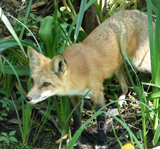 美国野生动物栖息地 现实中的zootopia