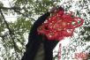 今年福州市主要干道都会挂上花灯、福字以增添节日气氛