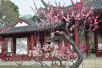 大武汉春节游玩全菜单!白天庙会晚上花灯,归元寺迎财神一路指南……