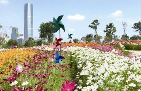 """春节赏花去 厦门岛内外多个公园将变身""""花海"""""""