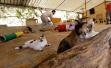 探访叙利亚动物避难所:为动物提供庇护(组图)