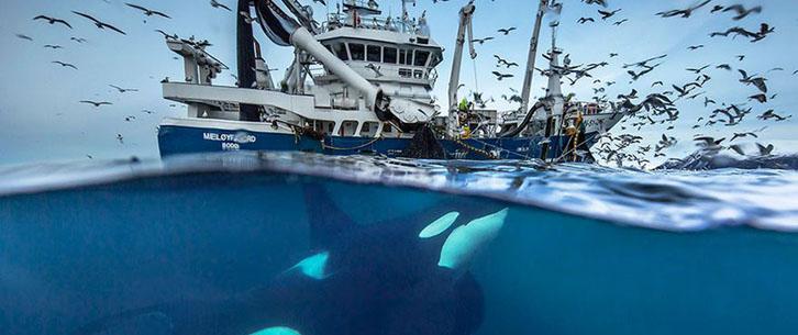 美到无法呼吸 生物学家拍摄绝美鲸鱼照片