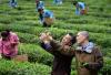雷军x大红袍传承人王顺明:醉品朴茶撬动传统茶行业