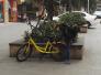 """共用單車被貼""""偷錢二維碼"""" 當心一掃錢沒了"""