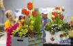 加拿大花卉与园艺博览会在多伦多举行
