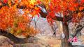 沈阳国际旅游节秋季游拉开帷幕 推出104项活动