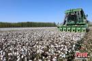 机械采棉告别人海大战
