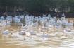 临沂走农牧循环发展之路 畜禽养殖污染整治显成效