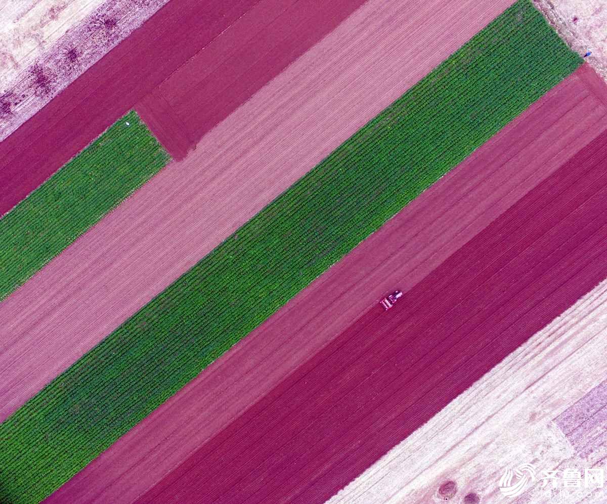 聊城小麦播种正值高峰期 田间犹如调色盘