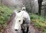 """英国一小猫与马和谐相处淡定当""""骑手"""""""