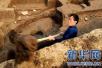 中国考古新发现榜单:青岛土山屯墓群遗址入围