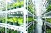 松下蔬菜工厂在华标榜安全 消费者可查阅生产记录