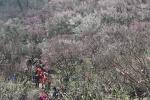 又到赏梅时 南京古林公园梅花进入盛花期