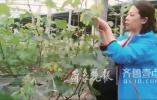 她曾是公司老总却回农村种大棚,辐射带动7000多乡亲