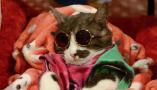 来自喵星界的霸气!曼谷国际亚洲猫展萌态百样