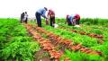 到2022年,山东创建100处产业体系完善的农产品品牌基地