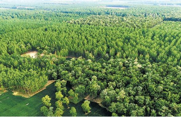 河南:去冬今春全省造林368万亩