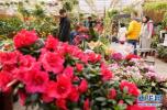 青岛花卉博览会4月28日开幕 花卉品种4000余个