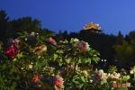 """越夜越美丽!北京景山公园推出""""夜赏牡丹"""""""