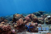 珊瑚礁比脸重要!夏威夷禁售防晒霜:就为保护珊瑚礁
