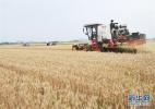 国务院:将每年农历秋分设立为中国农民丰收节