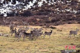 野生动物频遭垃圾惊扰 多个景区发布禁游令