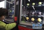 中国开始普及智能售货机 便利店危险了?