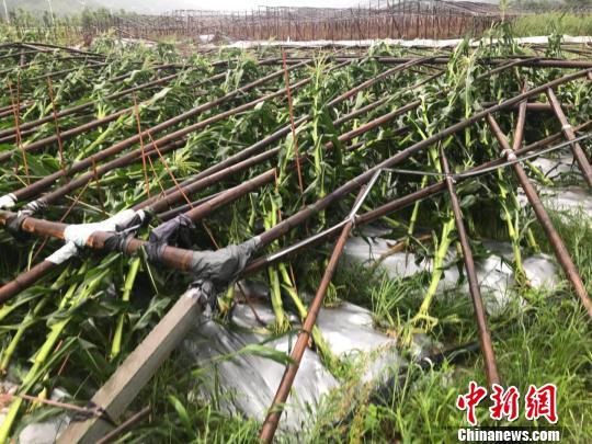 """浙江苍南遭台风""""洗劫""""农渔业损失严重"""