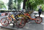 愿共享单车成为城市风景