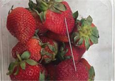 """澳大利亞""""草莓藏針""""案嫌犯被捕"""