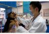 人民日报谈文明养犬:养狗非小事 法律规定严