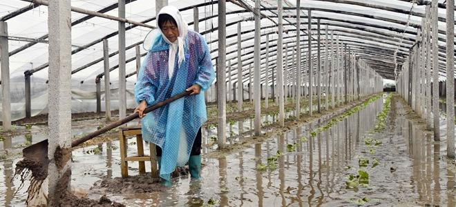 山东寿光:积极排涝受灾大棚