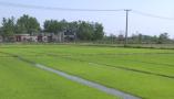 河南罗山:机械化插秧正在全县铺开