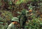 老山战役越军陷阱竹签涂粪便 人被刺中后伤口溃烂