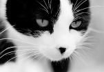 科学家发奇怪论文:猫从哪里来?啥时到达世界各地?