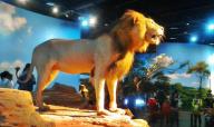 新看点!河南科技馆新馆获赠多件珍稀动物标本