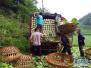 多方助力 三峡库区秭归县杨林桥镇蔬菜滞销基本缓解