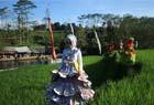 印尼玛琅田野时装秀