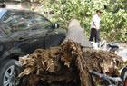 1米粗大树砸5辆车