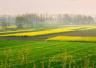 河南省小麦生长发育速度加快 苗情向好