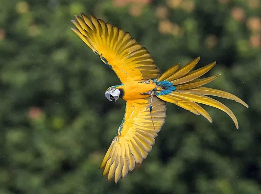 探究鸟类的生活状态