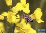 """这个调查不""""甜蜜"""" 全球大部分蜂蜜已受杀虫剂污染"""
