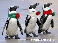 今年冬天,讓你的圍巾別守規矩!