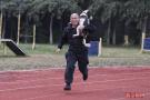 北京举行警犬跑步接力赛