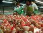 上周郑州粮油肉价格稳定 鸡蛋价格略有波动