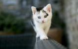"""妖猫与猫鬼:古代世界对""""喵星人""""的灵异想象"""