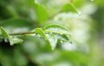 谷雨养生:除湿防病